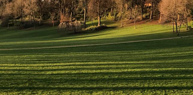 Avenham Park 1 copy