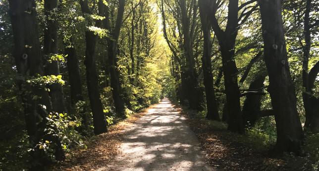 Avenham Park 3