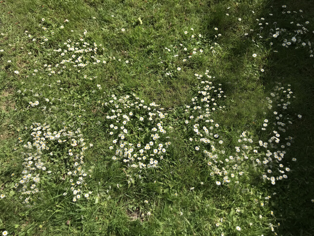 Daisies speak 2