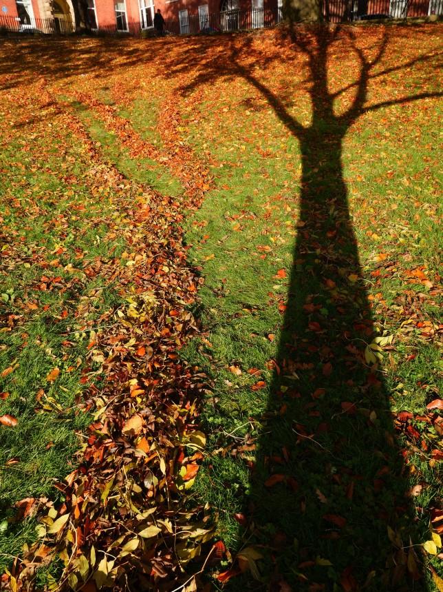 shadow tree photo 1
