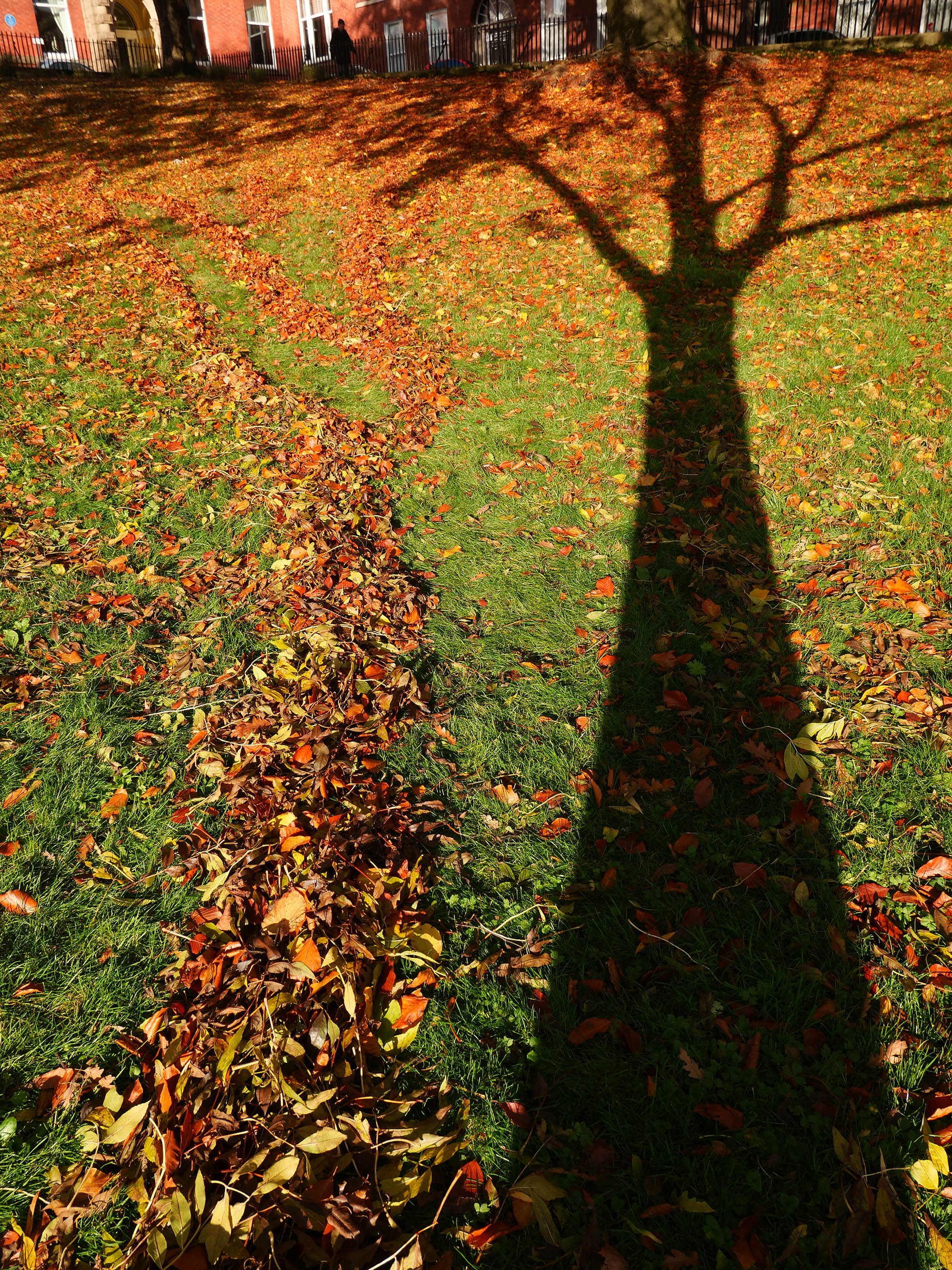 shadow tree photo 1