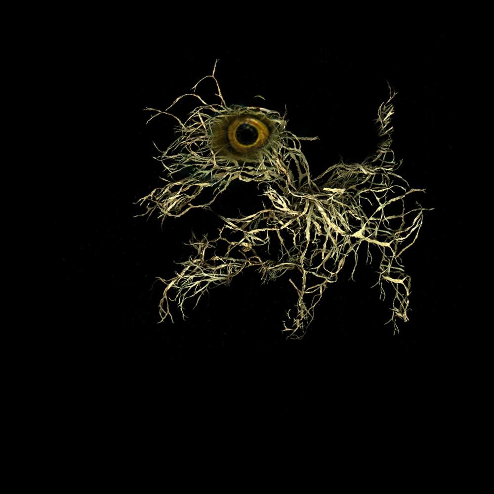 fern creature 3 copy